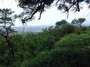 OLD MPHENI ON MOUNT LUVHOLA